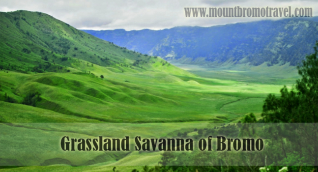 Grassland Savanna of Bromo, Another Awesome Spot to Enjoy